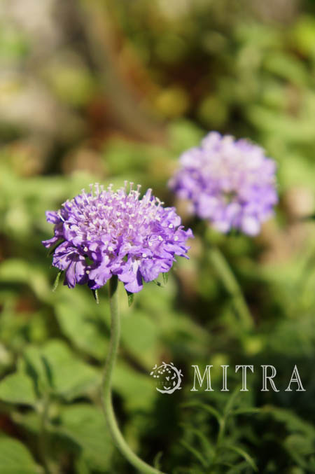 2012~My garden